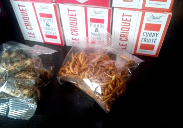 insectes comestibles Lille